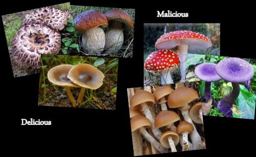 MushroomMontage